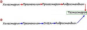 shema-vyirabotki-testosterona